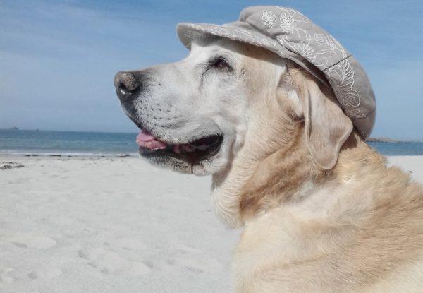 【速乾キャップで洗い方簡単】通気性とコスパ抜群の帽子で夏を涼しく快適に!